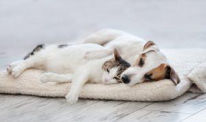 Haustierfreundlich